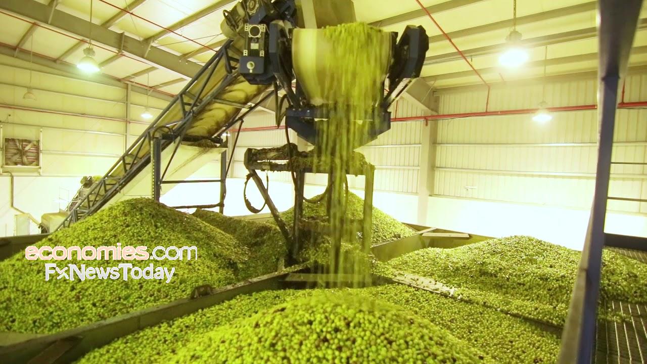 الجوف الزراعية تبدأ توزيع 0.5 ريال للسهم عن النصف الأول في 11 فبراير الجاري